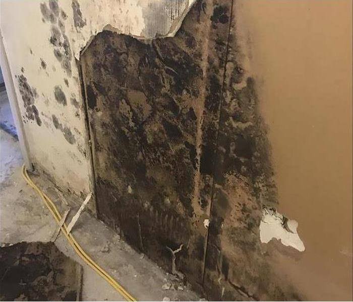 Mold Growth In New Albany Hotel