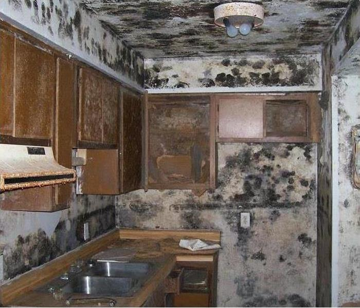 Mold In an Abandoned Home