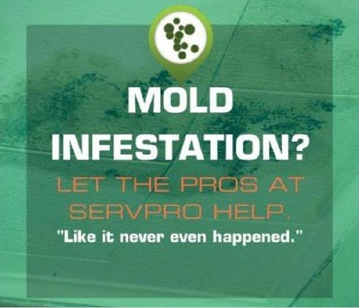 Got Mold? Call SERVPRO