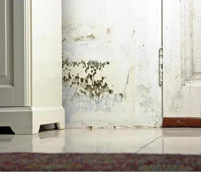 Mold Remediation Is Mold Hiding From You?