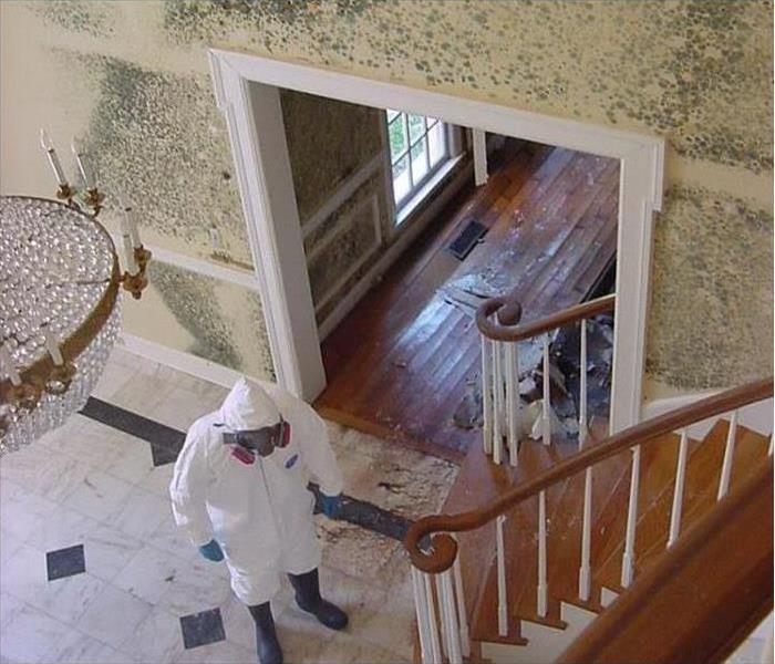 Mold Remediation How to Choose Between Mold Removal & Mold Remediation