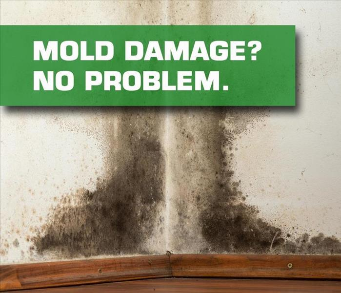 Mold Remediation Does Your Tupelo, MS Home Have A Mold Problem?